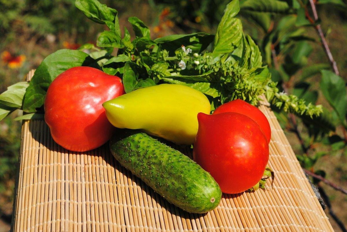 овощи огородные в картинках данном случае