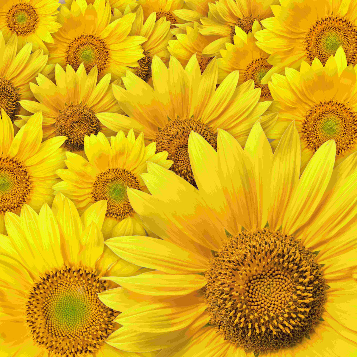 Желтые картинки красивые