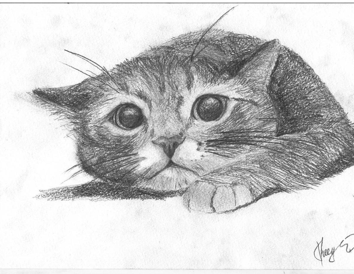 Рисунки для срисовки кошки карандашом, ураза