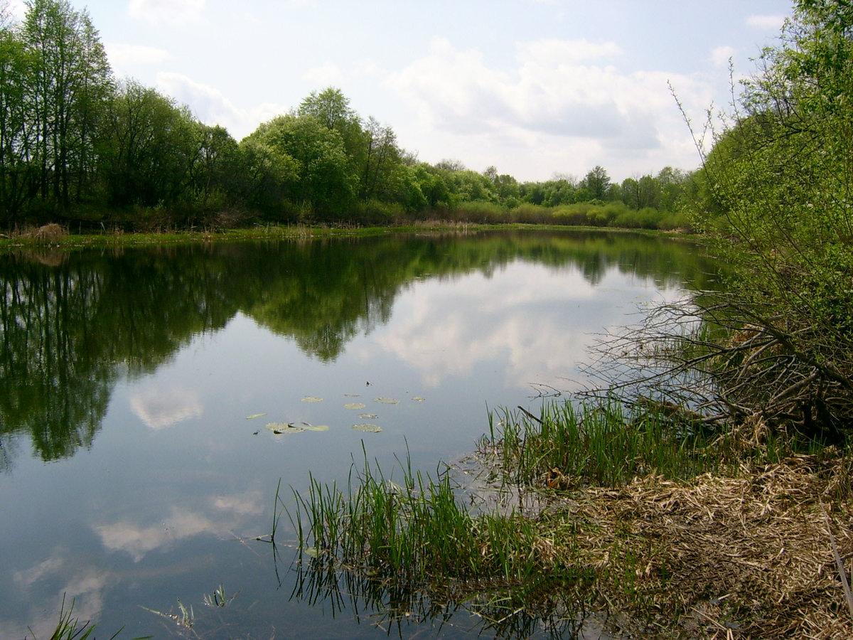 Озера старицы фото