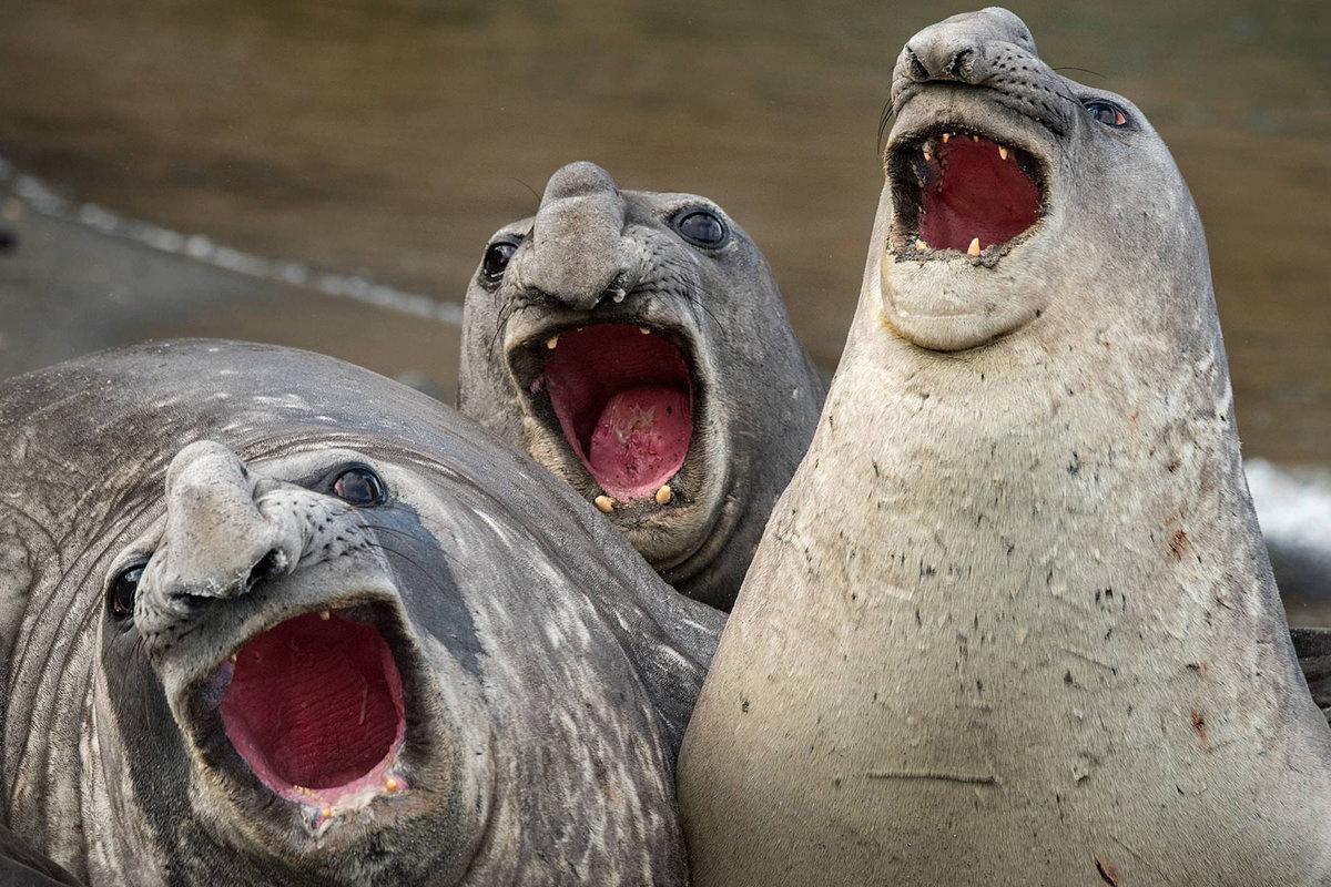 Картинка про животных смешные