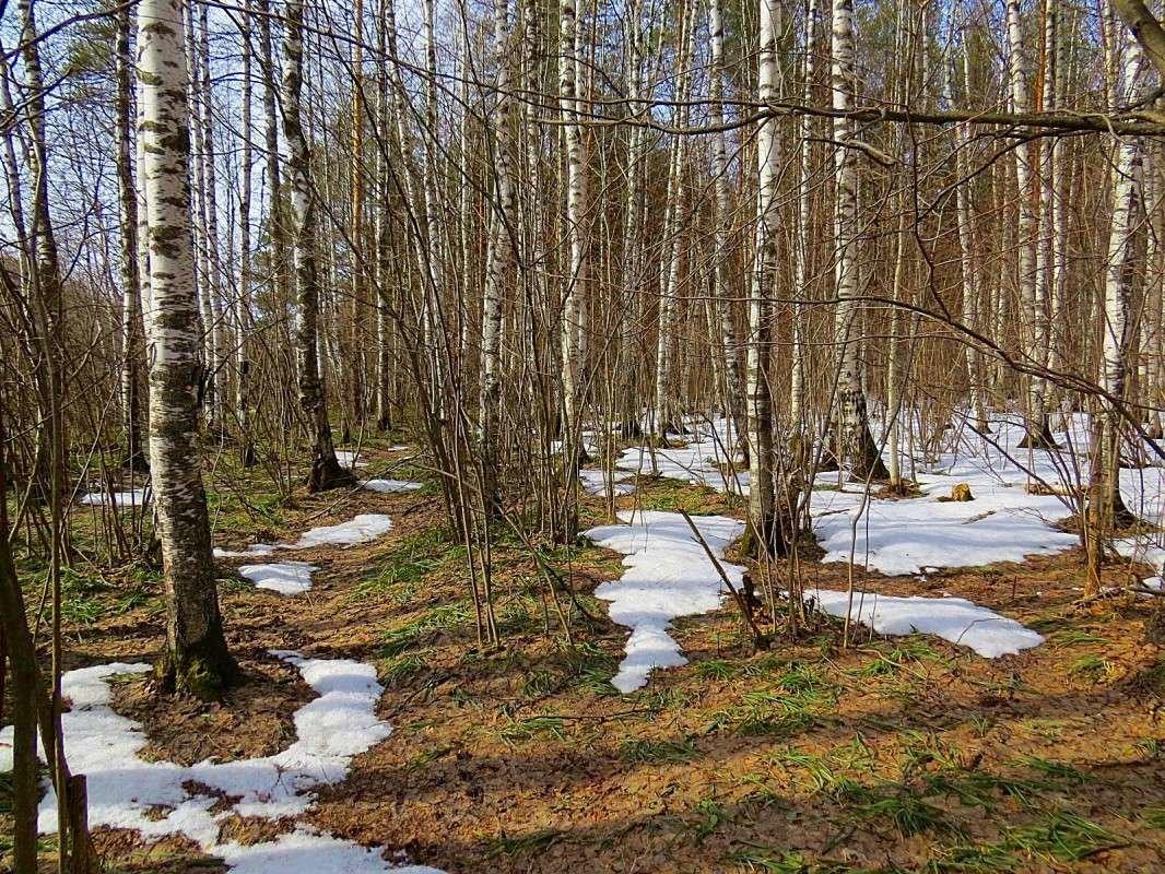 В весеннем лесу картинки для детей