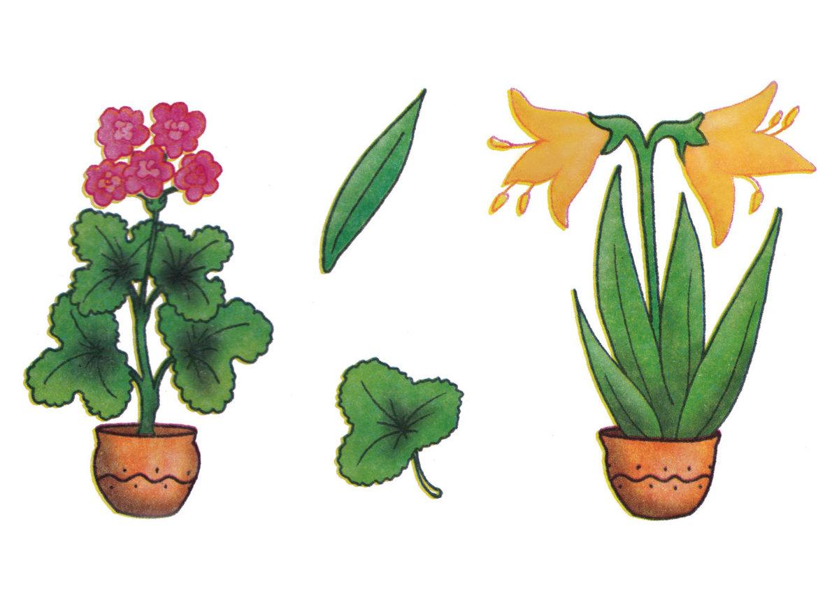 странице рисунок комнатные растения компания