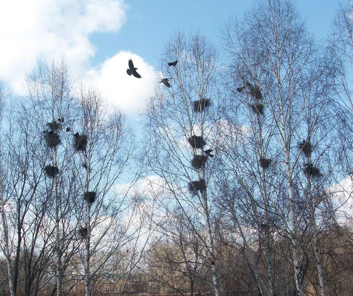весна грачи прилетели мужчина