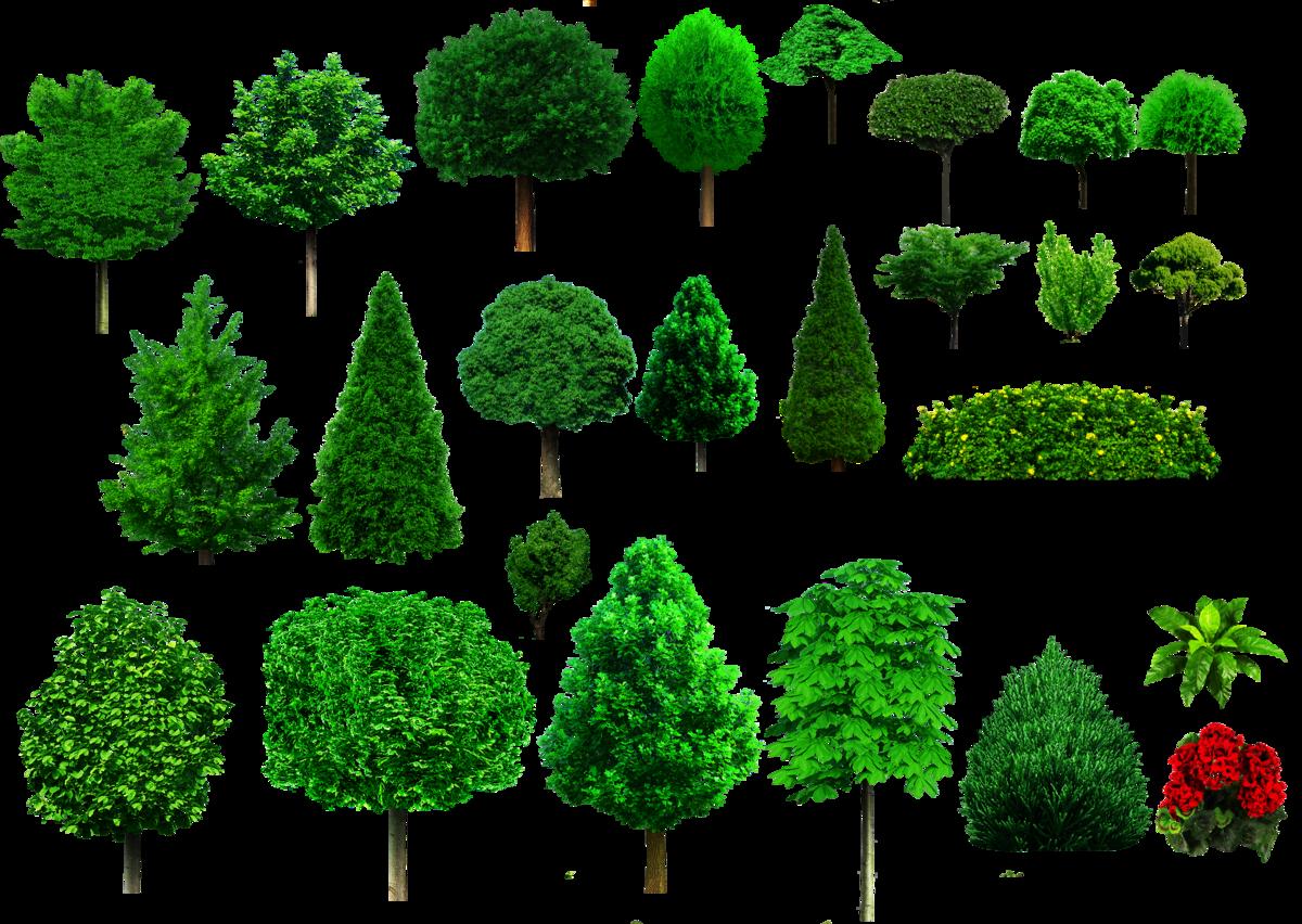 яркой деревья картинки проект так