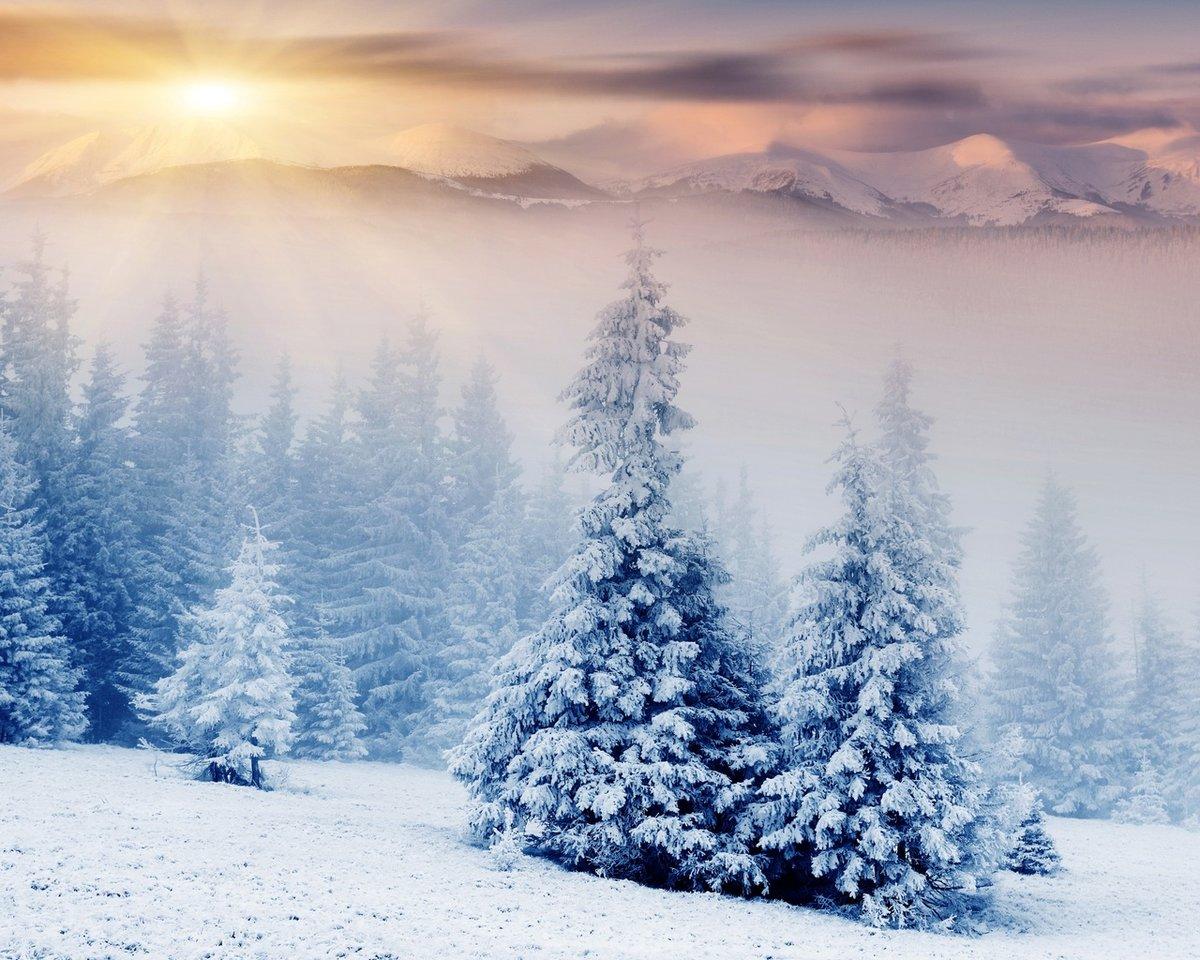 Картинки сказочный лес зимой, строителей смешные