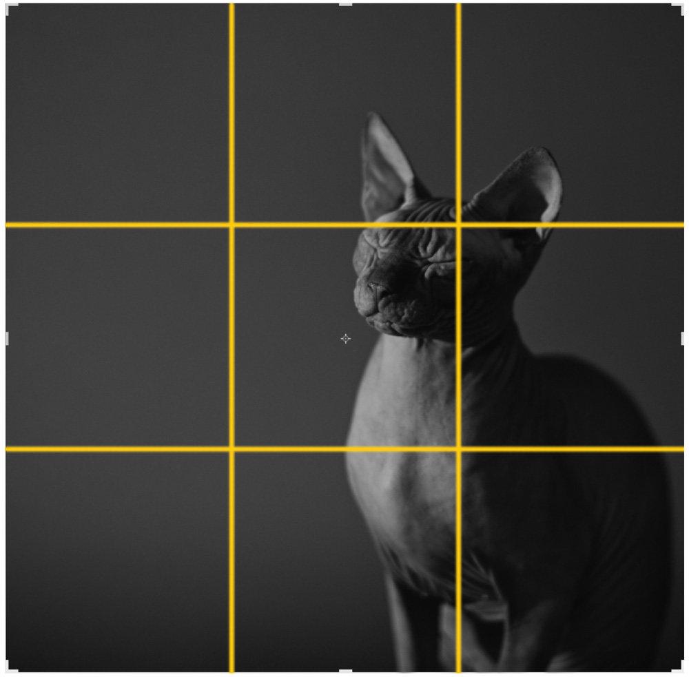 Как правильно пользоваться золотым сечением в фото