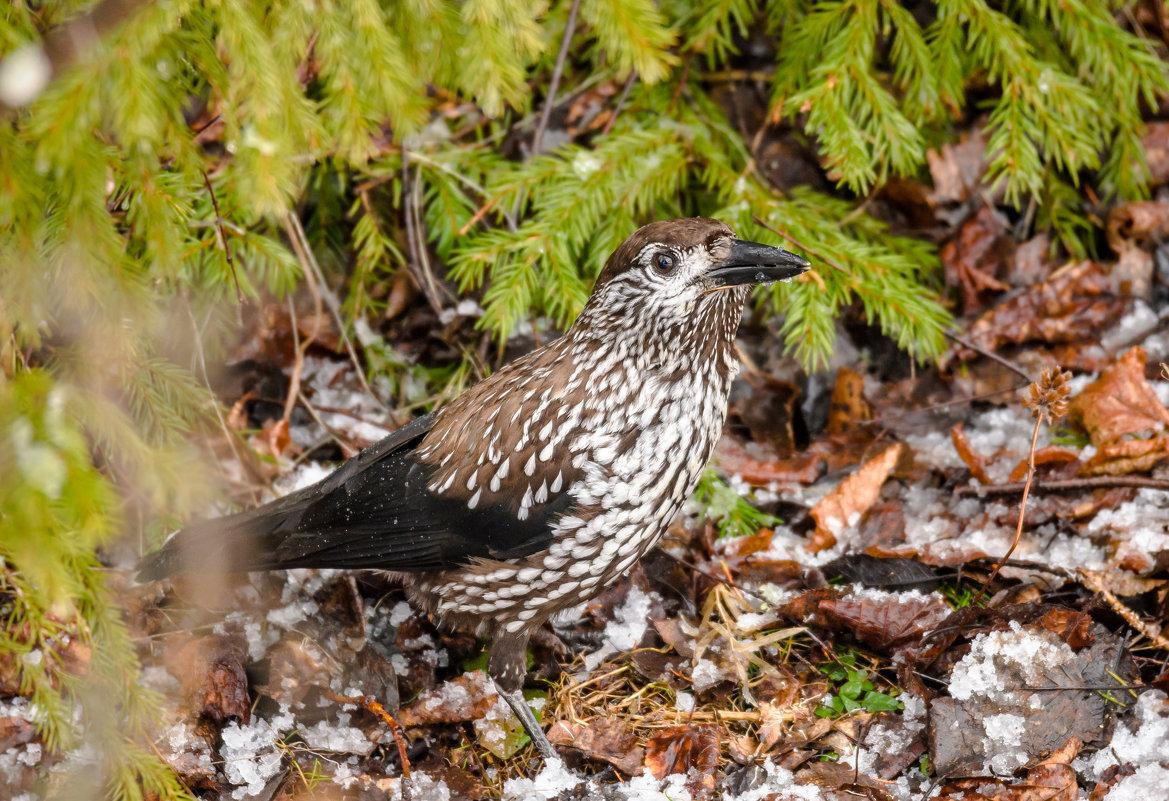 одном картинки с лесными птичками шварценеггера очень