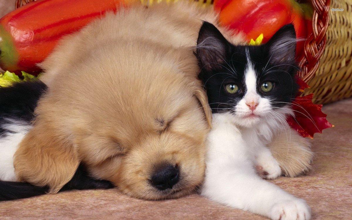 Смешные картинки с котятами и собаками, подписи