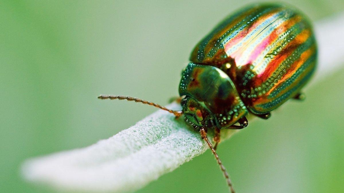 Красивые жуки картинки, мая стихи