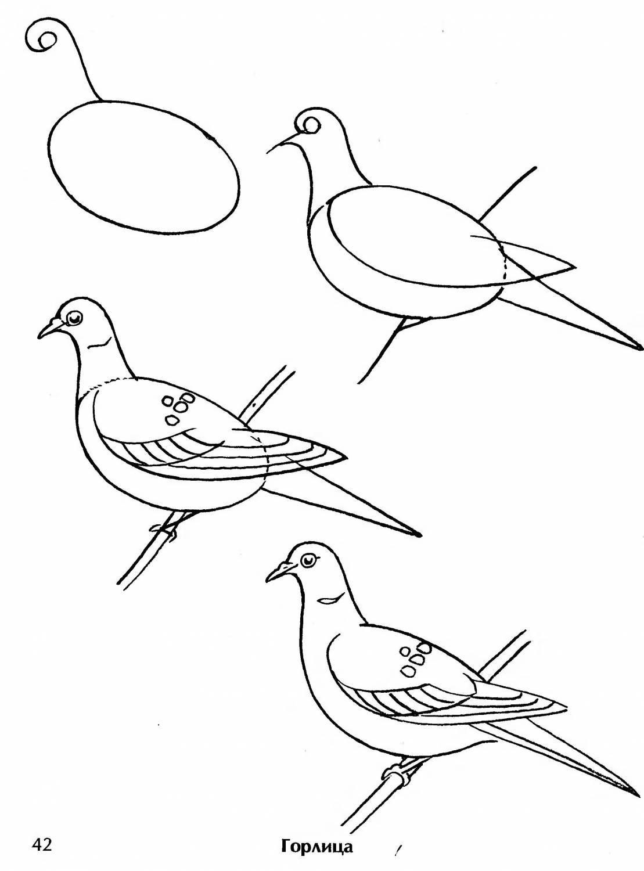 самые чудесные птица рисунок срисовать печать