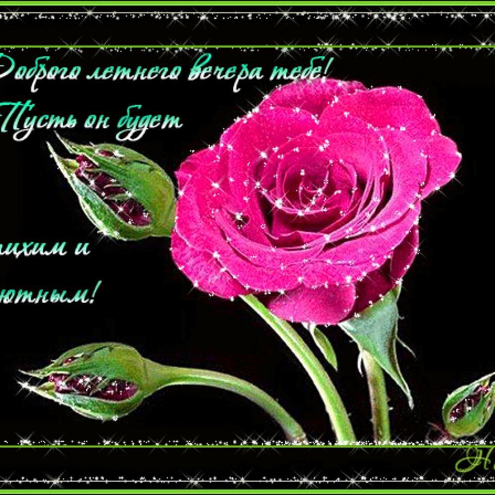 Открытки розы со стихами, поздравлением поступлением университет