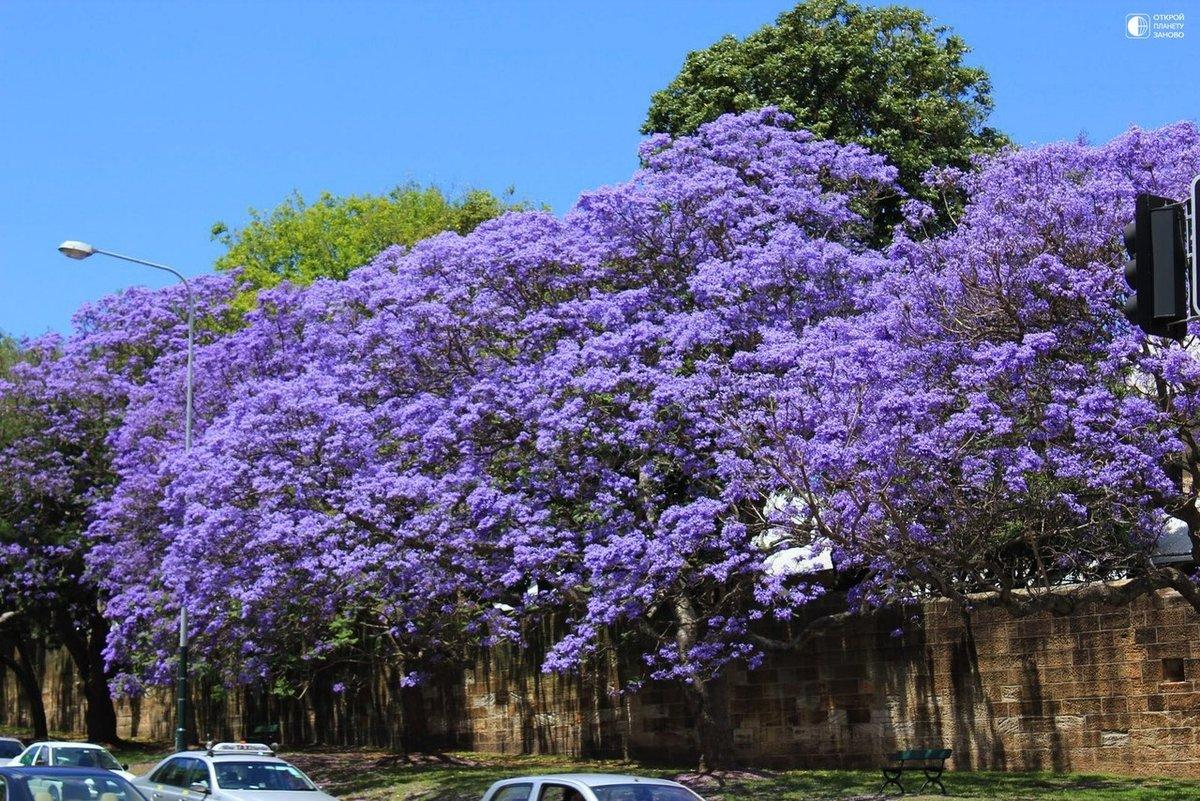 цветущие деревья индии фото обеспечивается точный