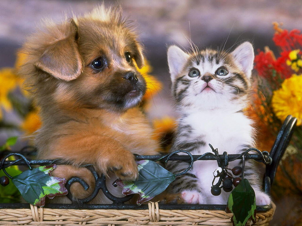 Для открыток, картинки кошечки и собачки