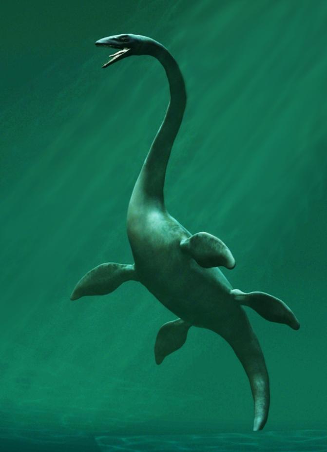 оккупирован динозавры водоплавающие картинки с названиями тюлевые шторы
