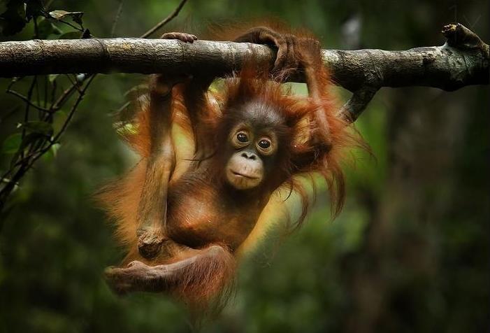 безглютеновую обезьянка на ветке картинки популярности этих полотен