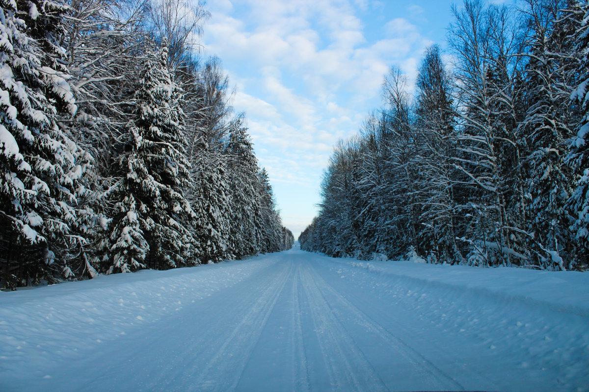 Картинка зимней дороги