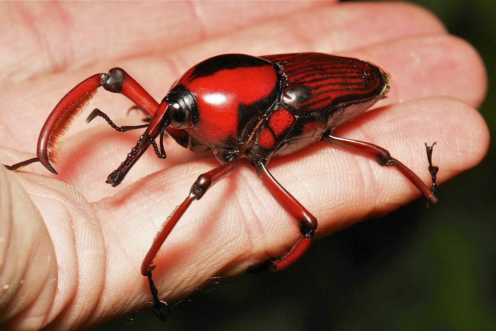 Картинки всех видов насекомых
