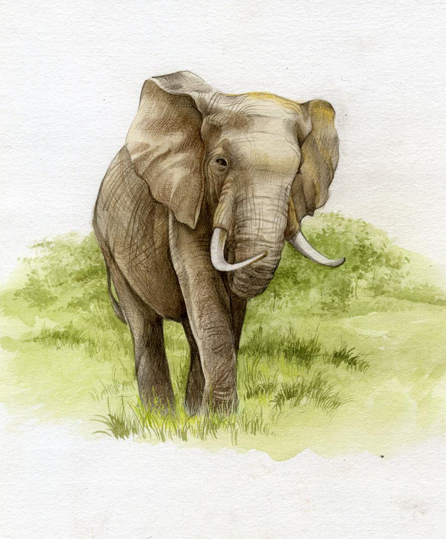 картинки рисунки слоники тут испытывается отношение