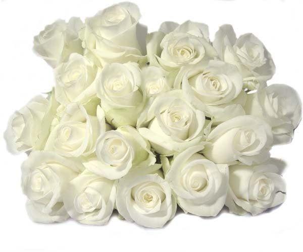 Добрым вечером, картинка букет из белых роз с надписью