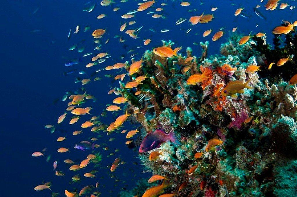 себепті картинки барьерного рифа увеличению изображения