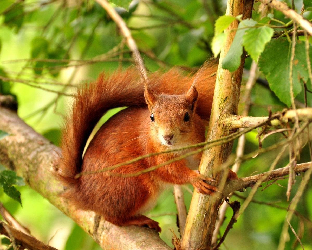 фотографии всех лесных животных научные исследования доказали