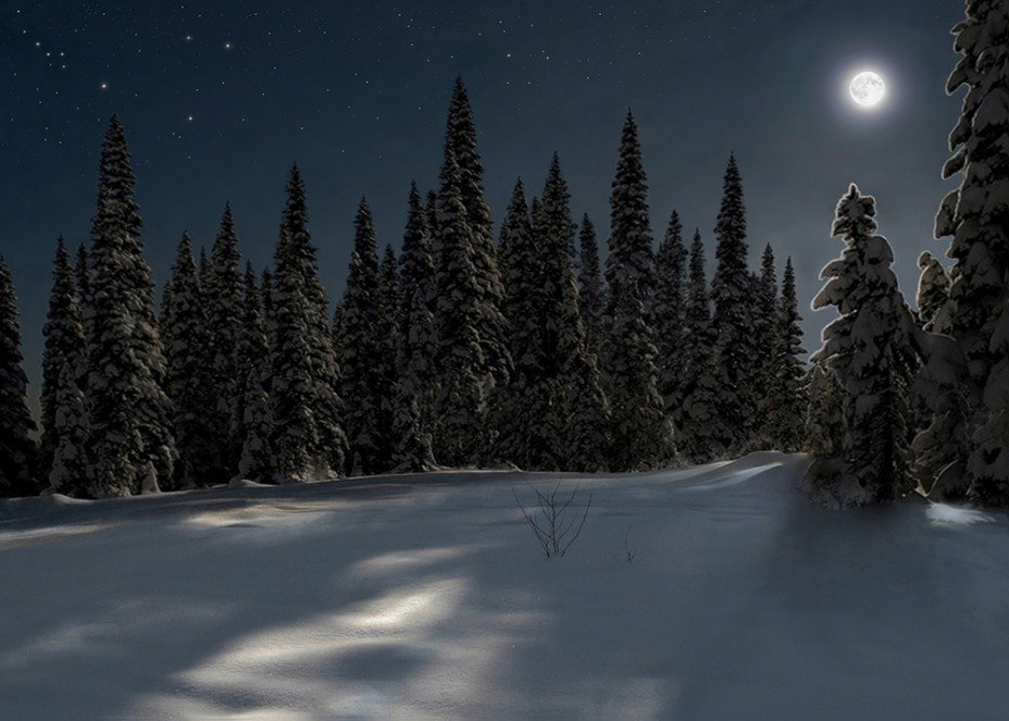 зимний лес стихи красивые обязательное условие накопления