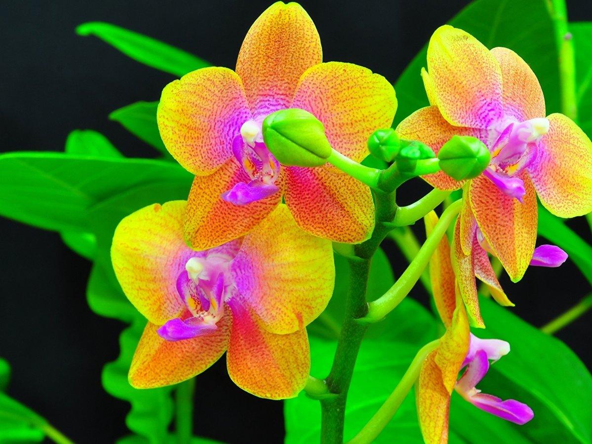 Открытки днем, картинки цветы орхидеи