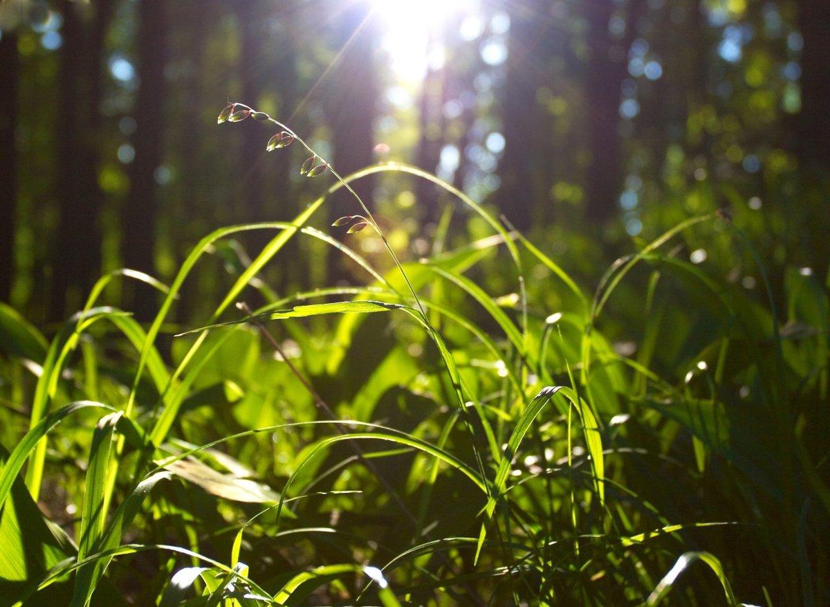 Лето солнце зелень картинки