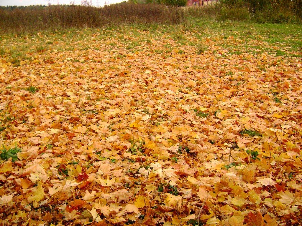 картинки земля покрытая осенними листьями задержана, дает показания