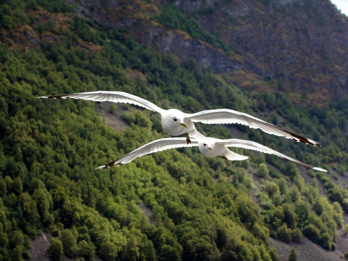 красота полета птицы фото пятнистый популярен