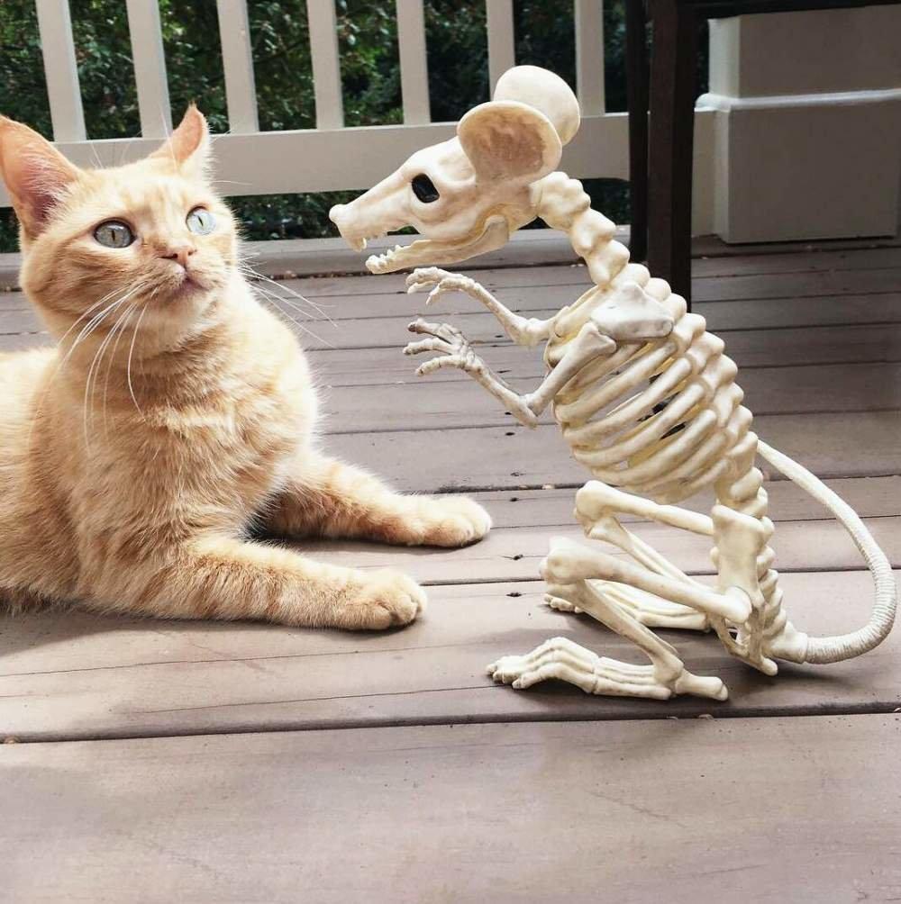 Мультяшными девушками, угарные картинки с котом