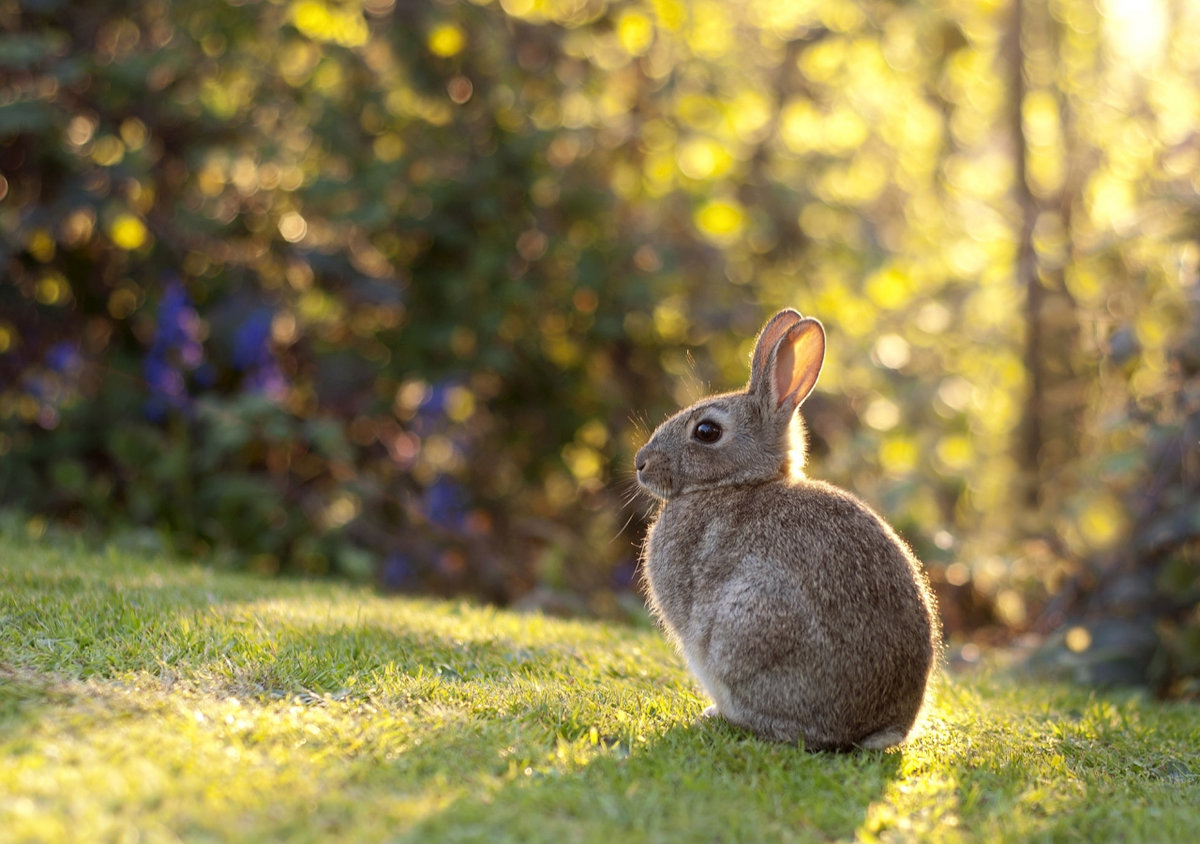 Зайчонок красивые картинки