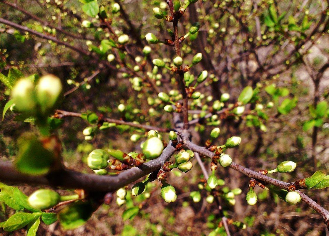 картинки весна почки на деревьях сделать сундучок