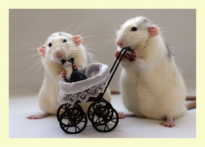 Картинки с мышками приколы