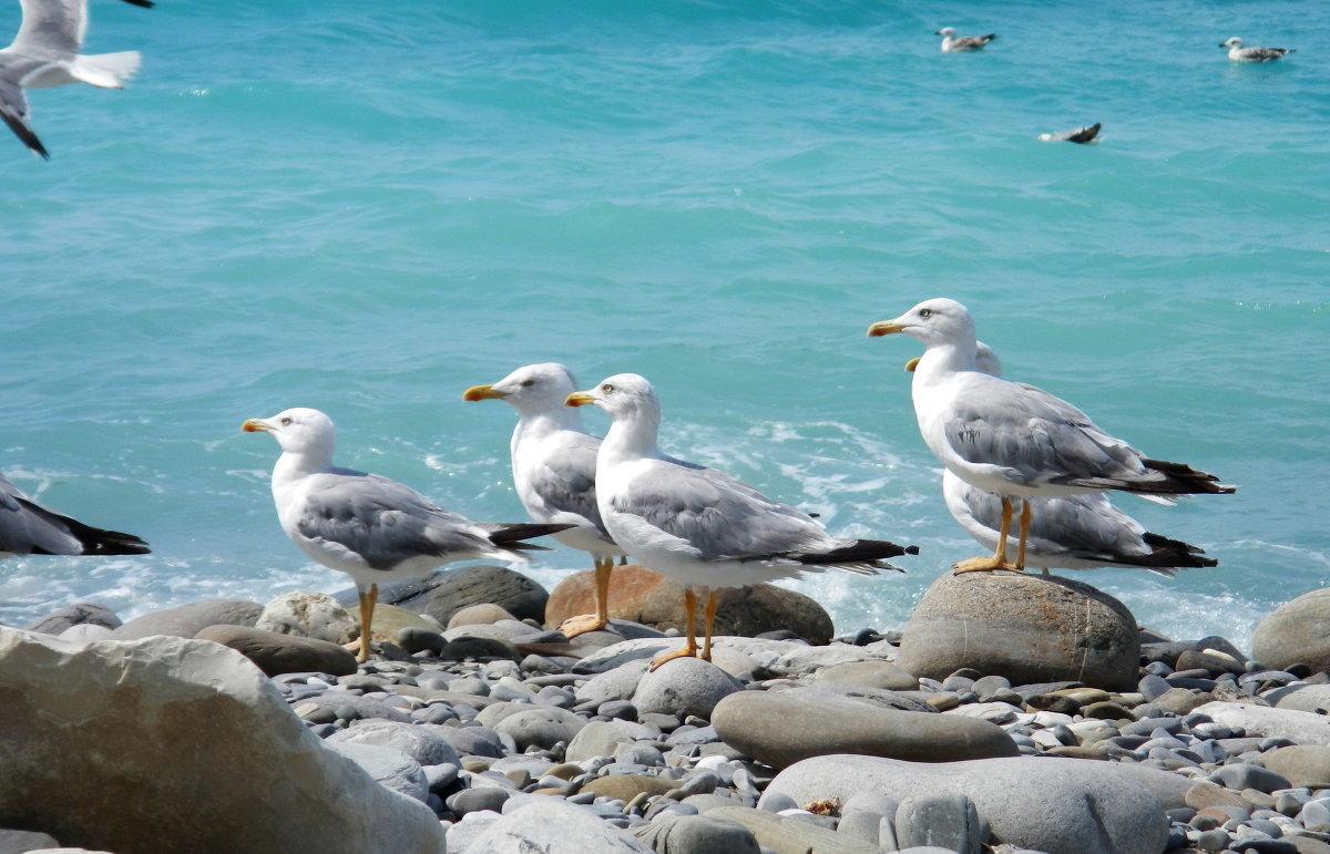 Красивые картинки чайки у моря
