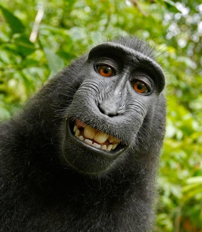 Картинки животных смешные на аву