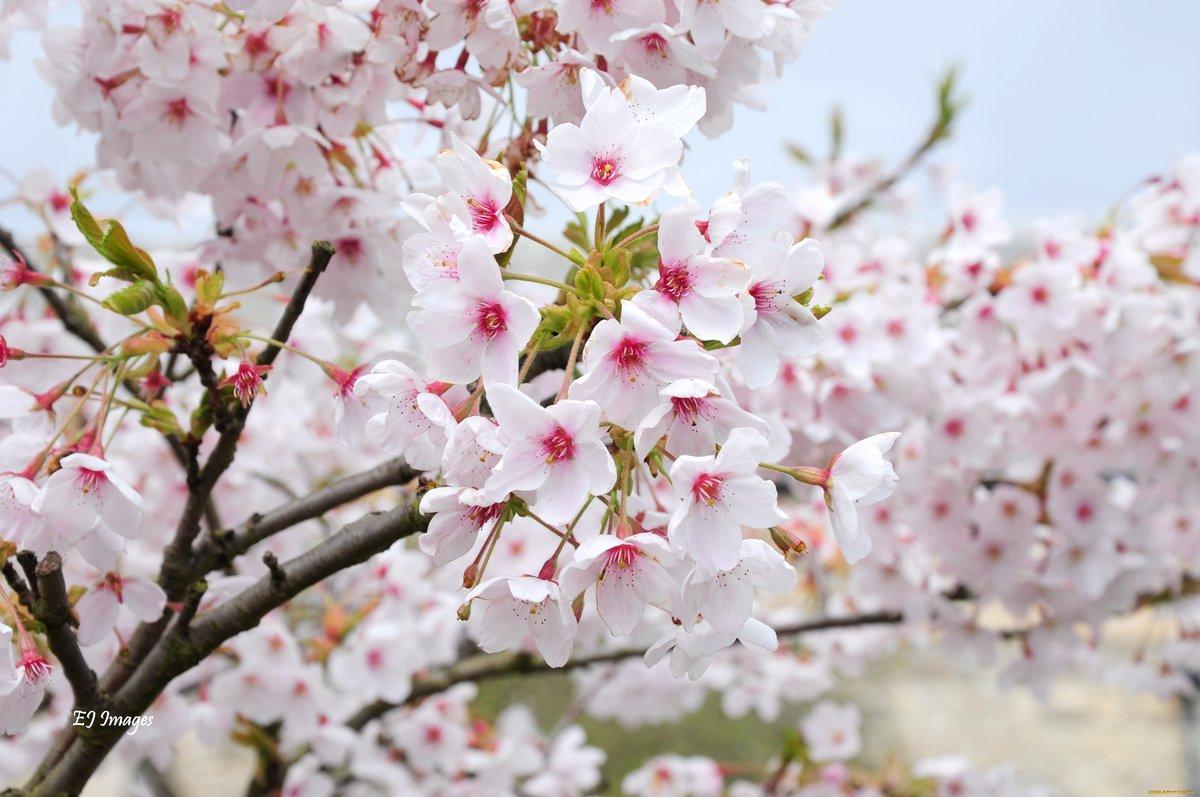 весенние цветущие деревья фото и названия строительства нового