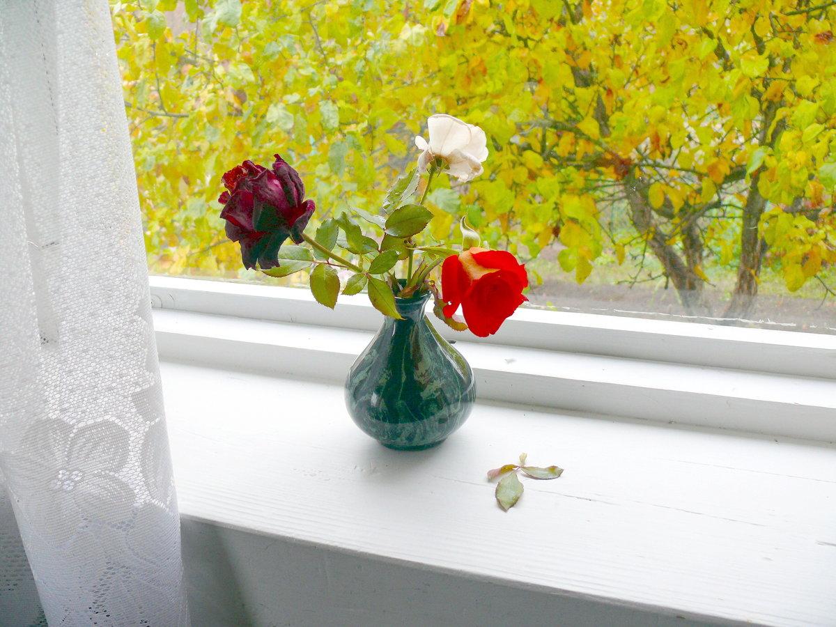 Белые розы в ладонях фото