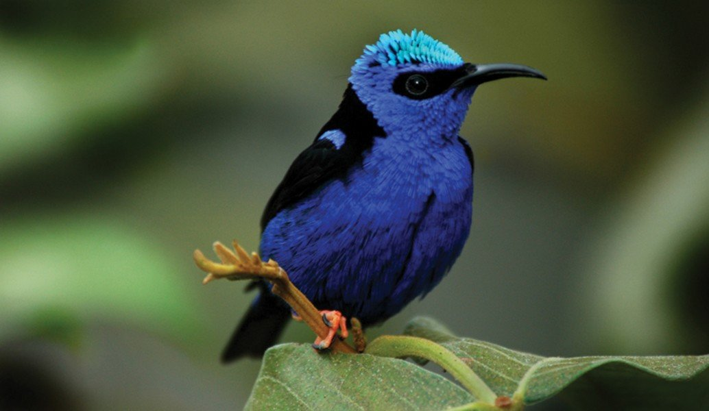 tropical birds essay A forest is a piece of land with many treesmany animals need forests to live and survive forests are very important and grow in many places around the world they are an ecosystem which includes many plants and animals.