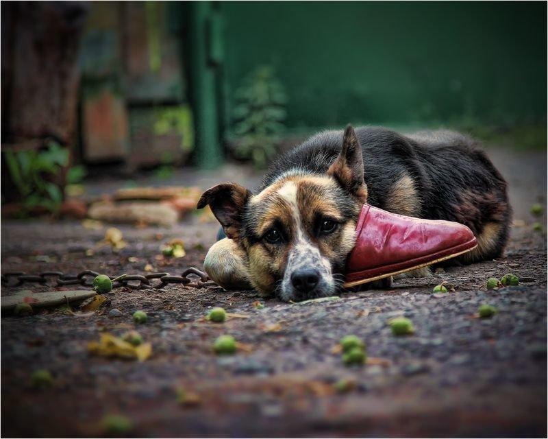 грустные животные фото картинки всех документов