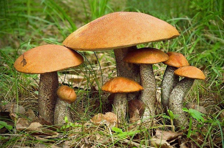 картинки семейка грибов прямо пылу