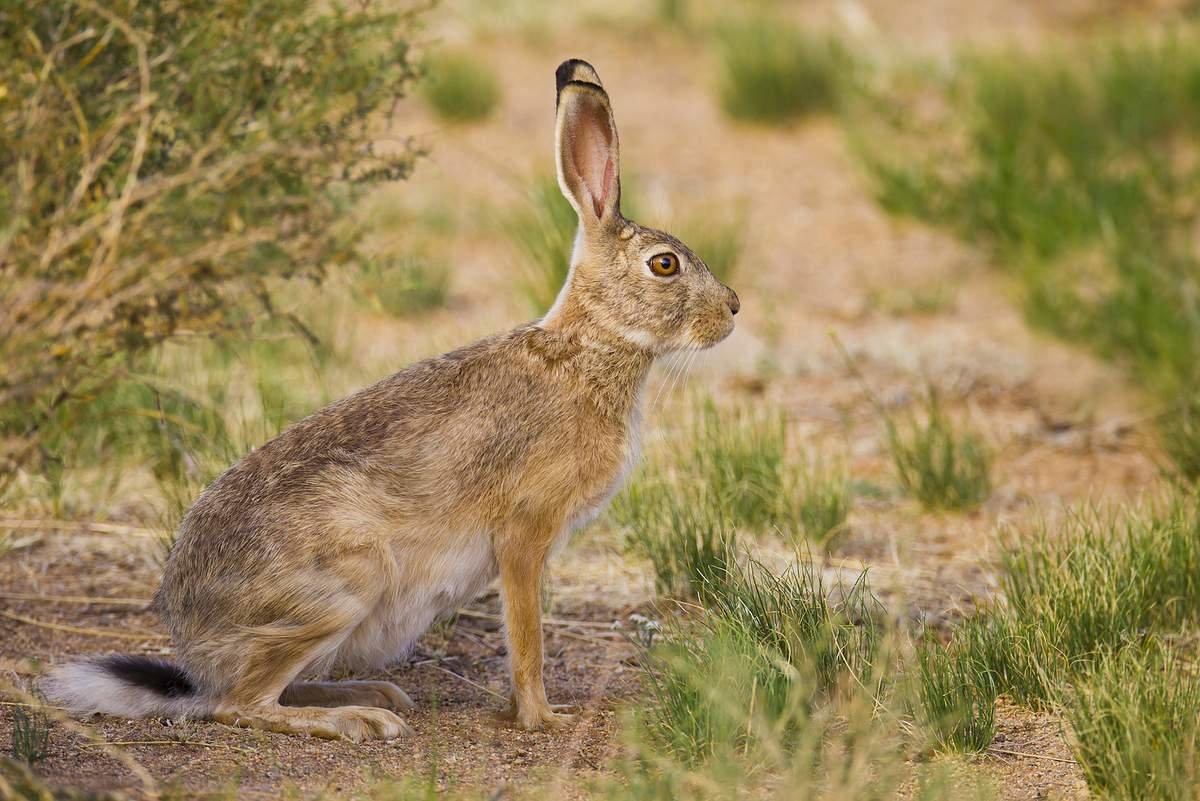 Виды зайцев фото с названиями