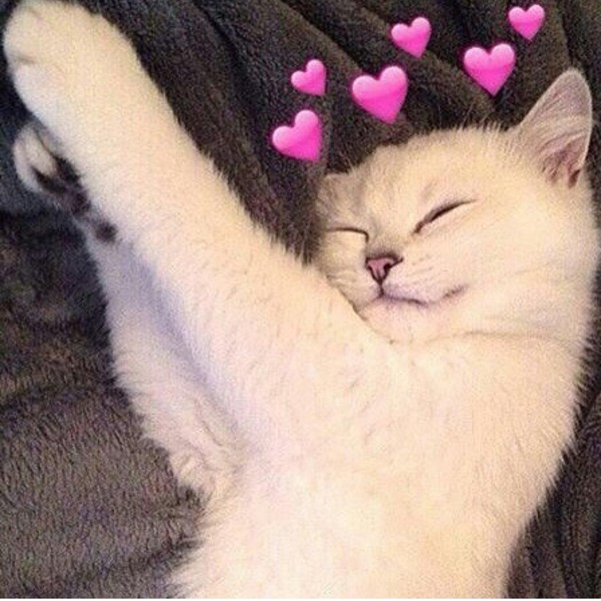 Картинки котики с сердечками над головой, игрушки спят открытки