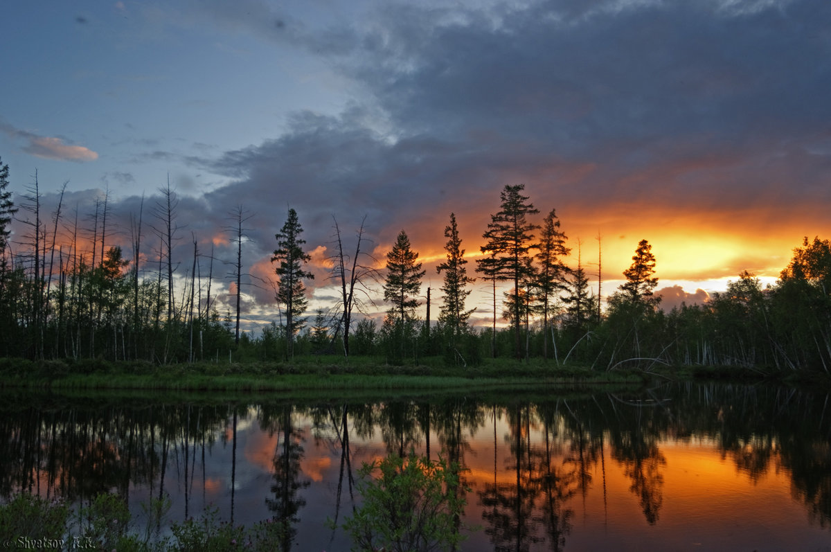 пресмыкающееся животное качественные фотографии российского леса удачной недели приятного