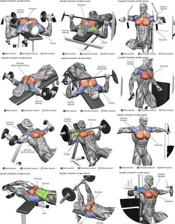 комплекс упражнений в тренажерном зале для мужчин картинки