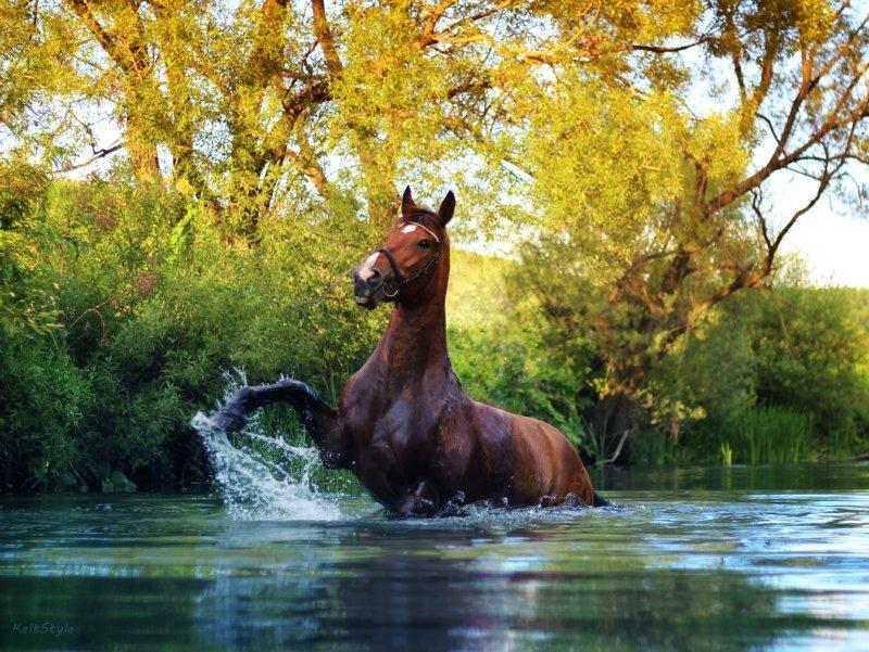 один озеро конь в картинках римляне основали свое