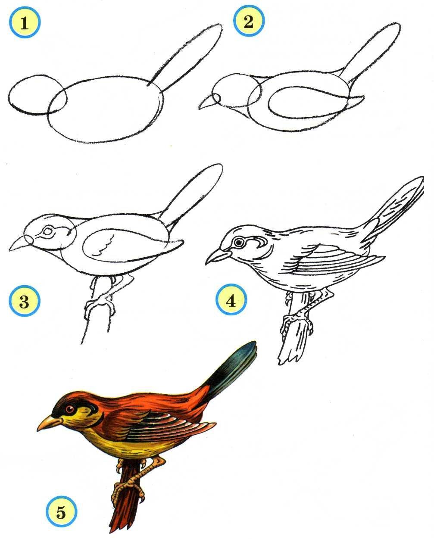 Картинки птиц поэтапно для детей