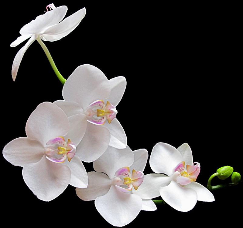 Днем рождения, картинки на прозрачной основе цветы