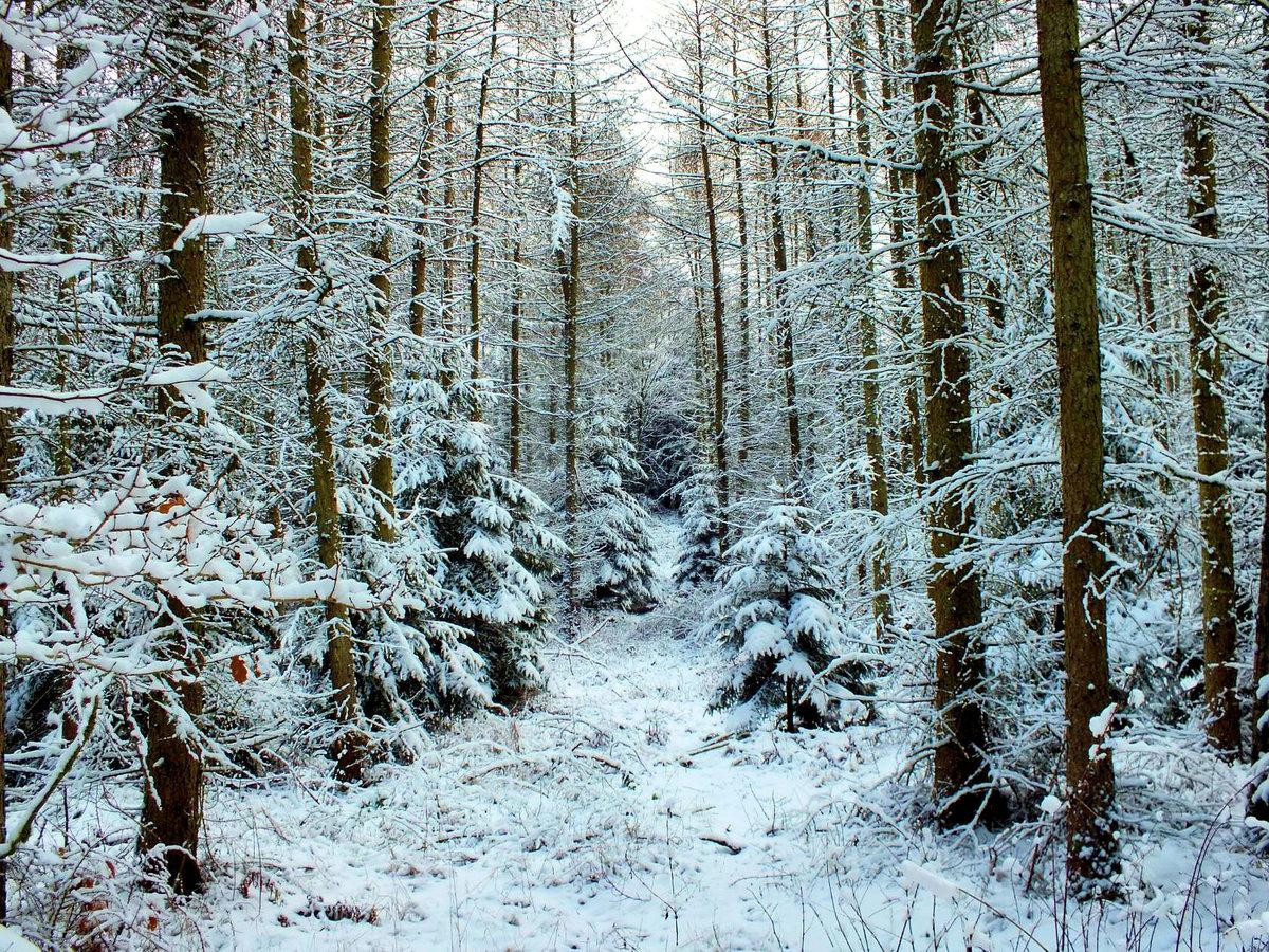 емкость для путешествие в зимний лес с фотоотчетом тут